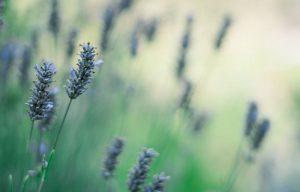 gardener-09